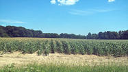 "<span style=""font-size: small;"">INDIANAPOLIS - Indiana crop conditions continue to deteriorate daily as the drought worsens to a level not seen since 1988.</span>"