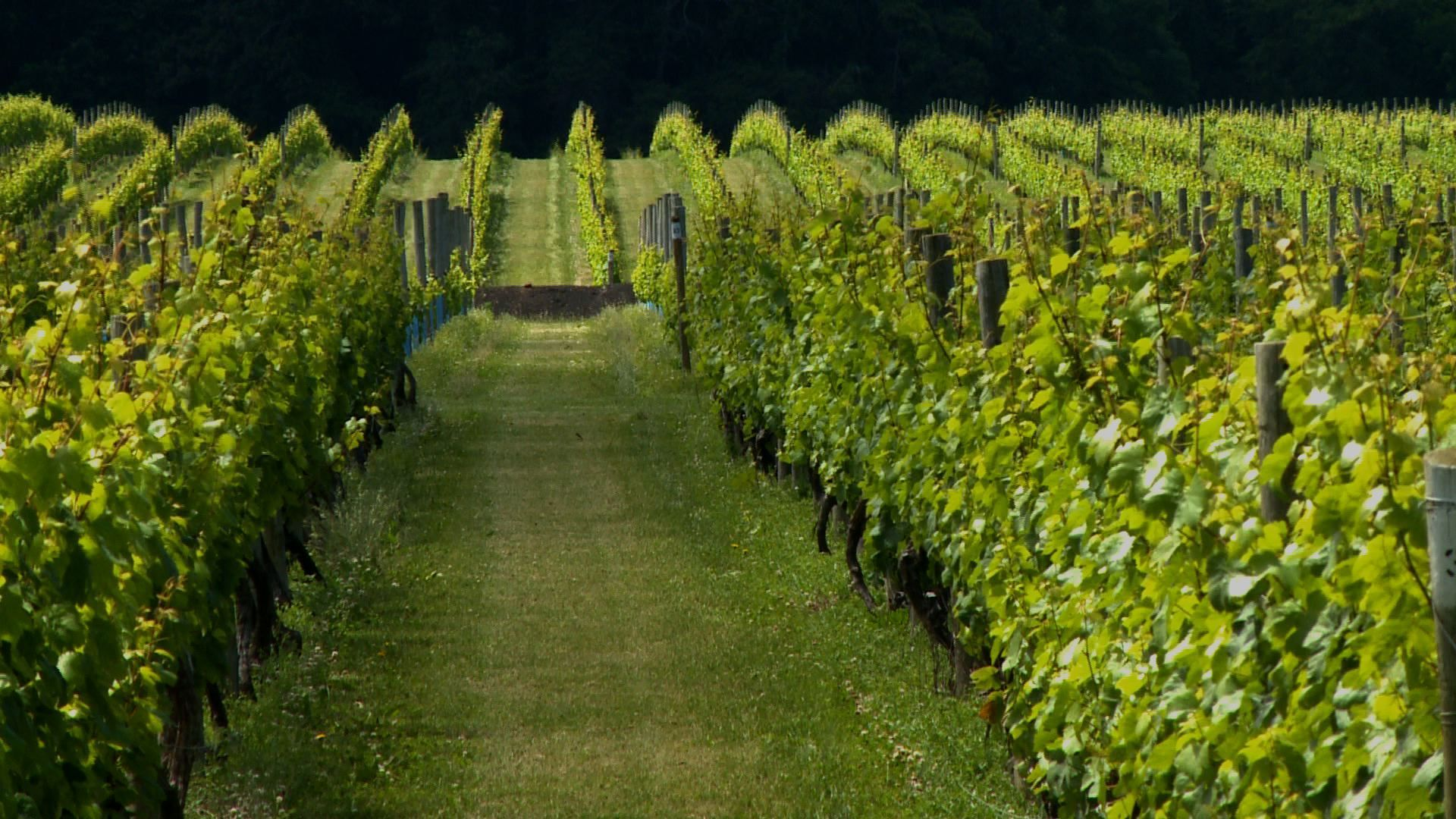 vineyard long island