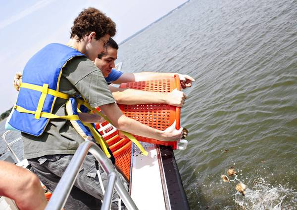 "Jon Deskins, 15, and his friend, David Lewis, 16, both of York County, plant oysters in the Back River near Langley Air Force Base in Hampton on Saturday. Volunteer oyster ""gardeners"" delivered thousands of oysters they've been raising for the past year and helped return them to a sanctuary reef."