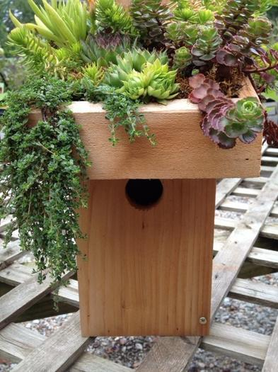 Sedums are planted in soil/moss in a recessed roof on a bluebird house.