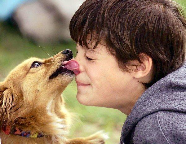 The dirt and bugs that dogs and cats introduce to human babies can be beneficial -- a sort of cross-training for an infant immune system. And new research suggests that babies in homes with dogs and cats get fewer ear infections and runny noses.