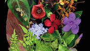 'Natural Companions': Botanical collages serve as DIY garden palette