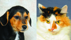 Danville-Boyle County Humane Society Pets of the Week for July 9