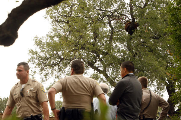 Members of the California Fish & Game, California Highway Patrol and Los Angeles County Sheriff's Department stand across the street from where a mother California black bear and her two cubs settled in on a tree above a home on in Altadena on May 1.