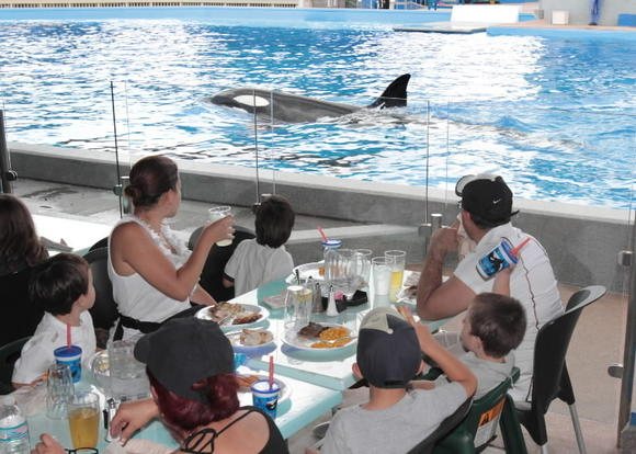 Photo: Dine With Shamu