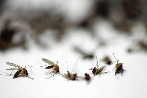 Culex mosquitoes is the genus responsible for West Nile virus.