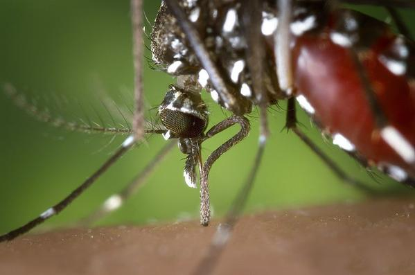 Thanks to an early spring and recent high temperatures, there are early reports of the West Nile Virus in Michigan.