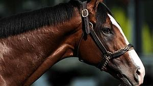 Belmont winner Union Rags to miss rest of 2012 racing season
