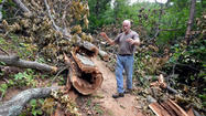 The wind storm that blew through western Virginia almost two weeks ago caused widespread damage in many neighborhoods. It also left its mark on the Appalachian Trail.