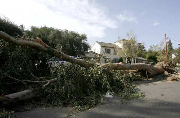 A tree fell on the 4900 block of Gould in La Canada Flintridge during last year's windstorm. City-owned trees will get a regular pruning starting in 2013.