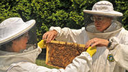 In Howard, a growing buzz over beekeeping