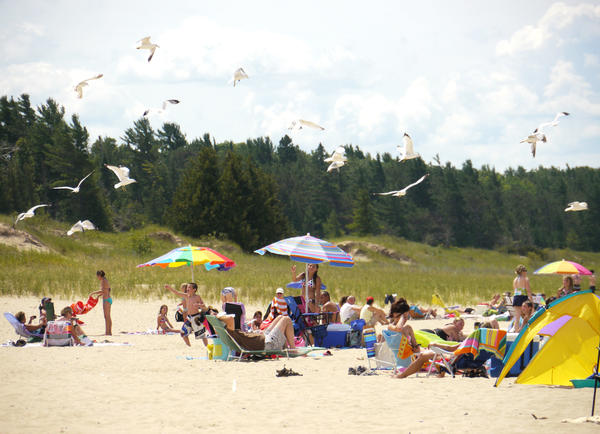 Feeding one seagull may turn into feeding a flock of seagulls, like this group at Petoskey State Park.