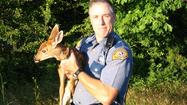 Fawn seeks help from trooper after mother is killed
