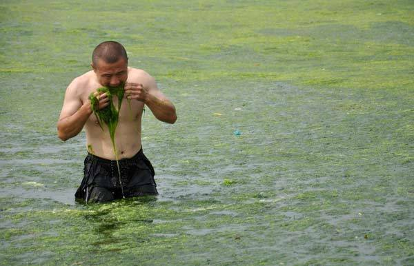 A man tastes algae as he stands on an algae-filled coastline in China.