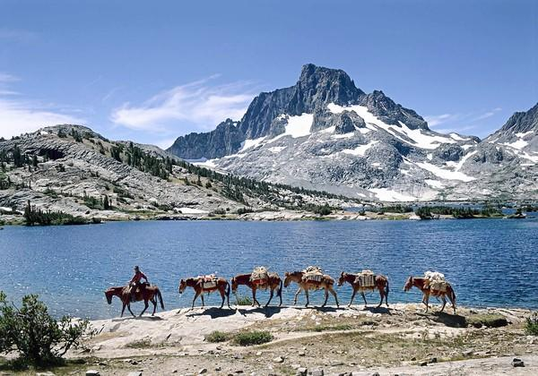 Cowboy packer leading mules at Thousand Island Lake, Ansel Adams Wilderness, Calif.