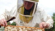 Beekeeper Keith Green thinks he might be on to something.
