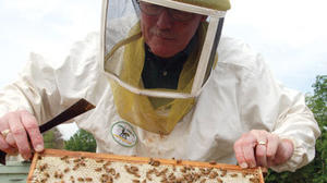 Beekeeper Keith Green turned a hobby into a business