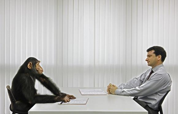 Primate co-workers