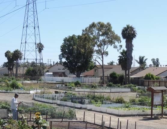 The Huntington Beach Community Garden at the end of Atlanta east of Brookhurst provides plots under the Southern California Edison power lines where people can grow their own organic vegetables.