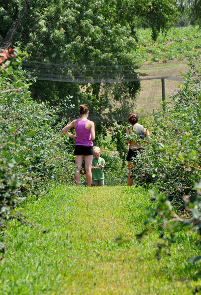 The original 36-acre plot began as a peach orchard and livestock farm. It has since developed into a popular destination for pick-your-own blueberries, apples and peaches.