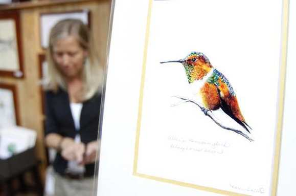 A colorful Allen's Hummingbird is just one of the many subjects painted by conservation artist and scientific illustrator Karen Talbot.
