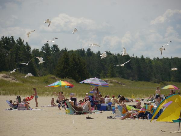 Feeding the birds at the beach, as seen here, will keep the birds around and could causes increases in the potential for swimmer's itch cases.