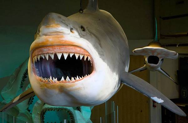 Models of sharks can be seen at Adventure Aquarium in Camden, N.J., which boasts the largest collection of the animals on the East Coast.
