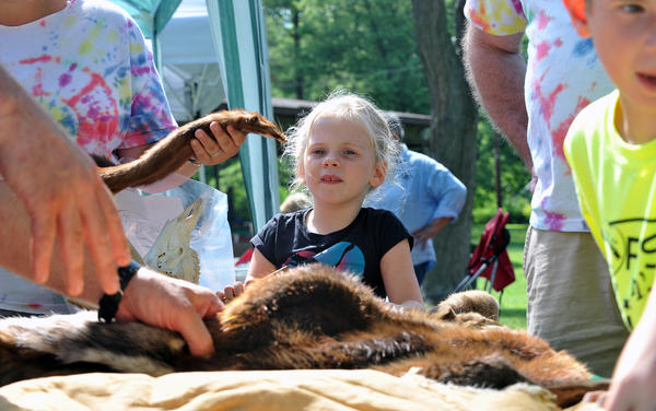 Skyler Thompson, 5, of Bethlehem watches and listens to Wildlife Conservation officer Kevin Halbfoerster talk about various animal pelts during Emmaus Parks and Recreation Commission's Community Day on Saturday, July 21 at Emmaus Community Park. The event included games, music, and food.