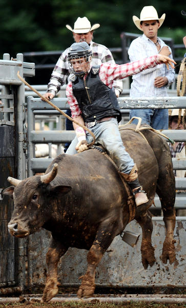 Gage Gay comes out of the bucking chute at the 2012 Ag Expo Bull Riding event Saturday night.