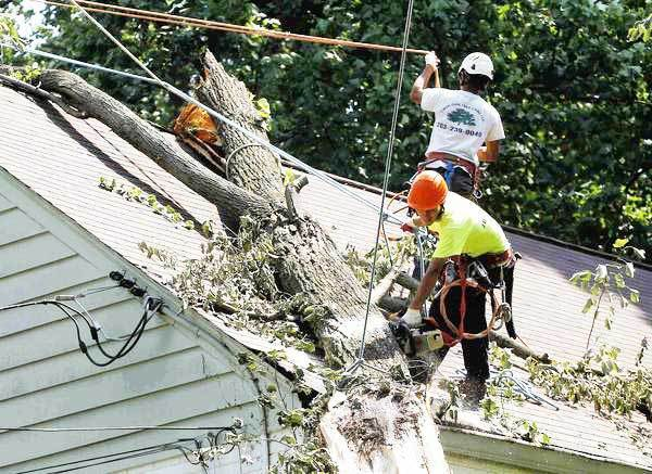 Trees provide benefits to homes, but when they fall and damage property, trees are liabilities.