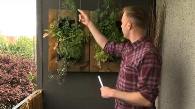 Northwest Gardening: Vertical gardens for urban spaces