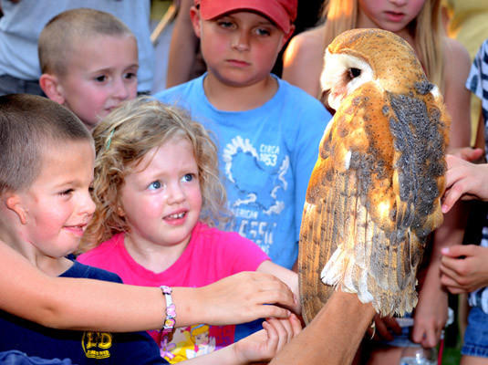 Hunter Francisco, 5, of East Greenville, left, and Ainsley Gehman, 4, of Schwenksville, center, look at one of the barn owls banded by Pa. Game Commission team Tuesday. Pa. Game Commission staff and volunteers banded 5 birds Tuesday evening.