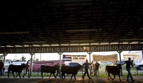 Photo Gallery: Mercer County Beef Show To purchase photos visit http://amnews.mycapture.com