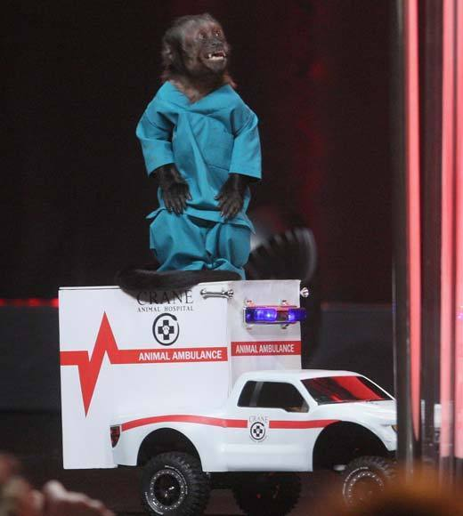 Overheard at 2012 Summer TV Press Tour: Crystal made a cameo appearance at the Animal Practice panel on her ambulance. But like any good diva, she did not take questions.