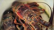 Wondering what to do with your spiny lobster catch?