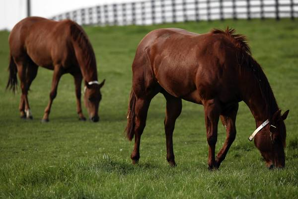 Horses graze in the yard of former Dixon comptroller Rita Crundwell's home in April. A company has been hired to auction off 400 of the horses.