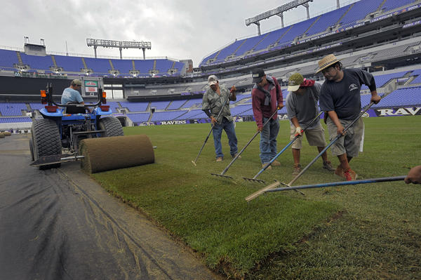 Foreman Larry Morgan of Tuckahoe Turf Farms operates the tractor, laying down spools of sod, installed over the artificial turf Tuesday at M&T Bank Stadium. The upgraded field will host a soccer match this weekend between the Tottenham Hotspur and Liverpool Football clubs.