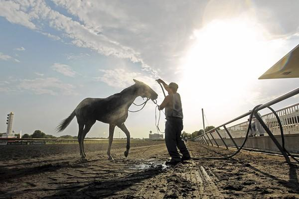 A horse is hosed off after a race at Arlington Park Racetrack in Arlington Heights.