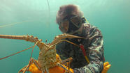 <b>Photos:</b> Lobster mini season in South Florida