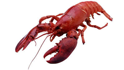 A Decline in Maine Lobster Prices Is Yet To Have An Effect in CT