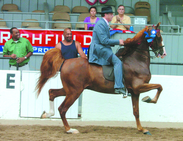 Danvilles Mitch Clark won the open park pleasure class with Knightly Sport on Tuesday at the Mercer County Fair and Horse Show. It was the first show ring appearance for Knightly Sport, owned by Leslie Schaefer.