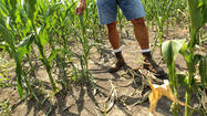 Despite rains, Michiana still in drought