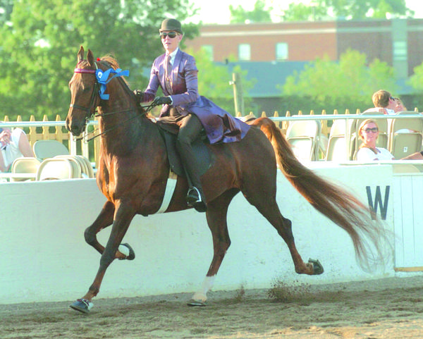 Deborah Butler rides Bi Mis Southern Rose to a win Wednesday in the Adult Five Gaited Pleasure Class at the Mercer County Fair & Horse Show.