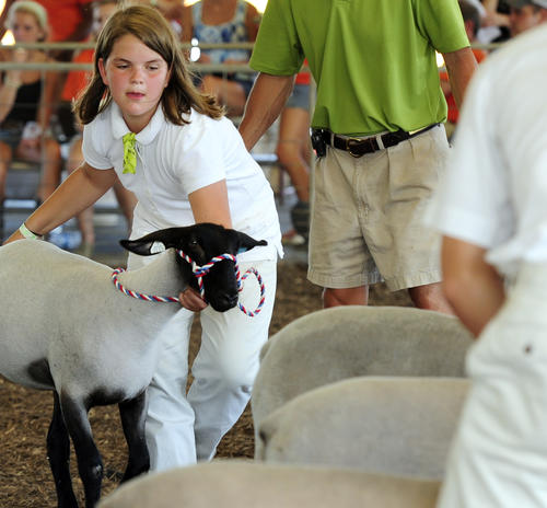 Ashley Beichler guides her Suffolk lamb into place, while showing in the 4-H middleweight class at the Harford County Farm Fair Friday.