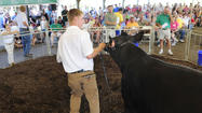 Pictures: 4-H Livestock Auction