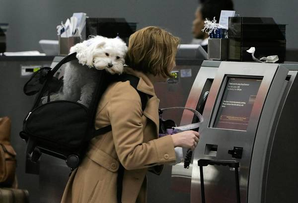 Corie Gellerwith her dog, Rocky, in tow, checks in for her flight to Kansas City at O'Hare International in Chicago in 2005.