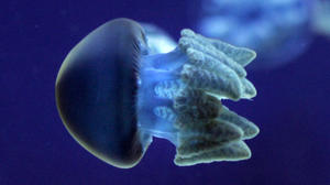 Jellyfish a model of efficiency
