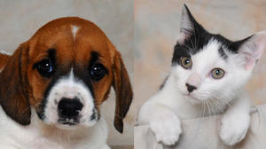 Danville-Boyle County Humane Society Pets of the Week for July 31
