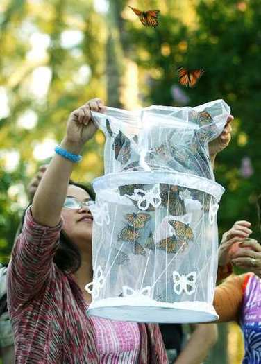Thea Ivens releases a net of Monarch butterflies during a prayer vigil for missing FBI agent Stephen Ivens at McCambridge Park in Burbank on Wednesday, July 11, 2012.