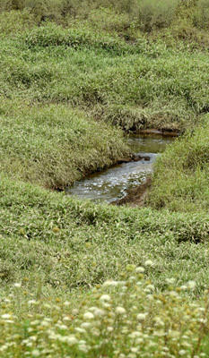 A small stream still flows through the center of Leaser Lake in Lynn Township Wednesday. The lake is still drawn down as the dam rehabilitation project is not yet complete. When the project is completed the greenery in this picture will be under water.